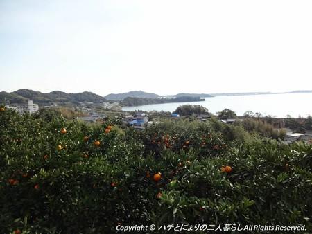 2012-11-24ミカン狩り (1)