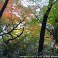 Photos: 2012-11-24ミカン狩り (14)