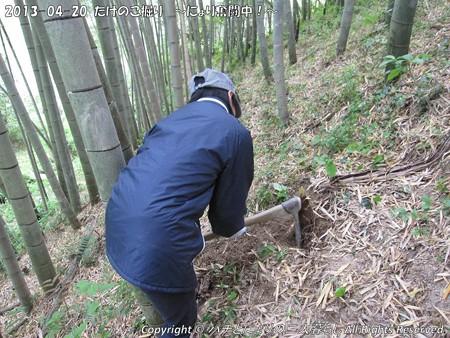 2013-04-20たけのこ掘り (3)