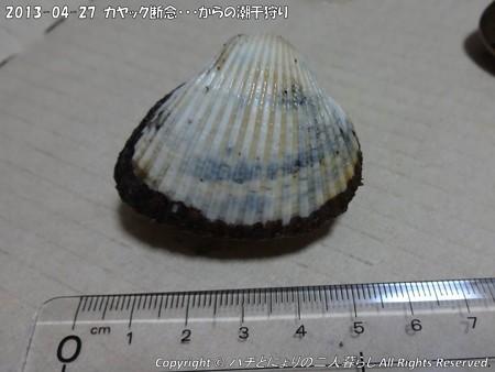 2013-04-27カヤック断念からの潮干狩り (1)