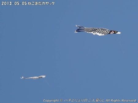 2013-05-05ねこまたカヤック (1)