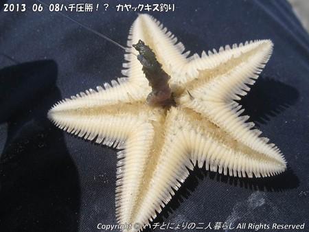 2013-06-08ハチ圧勝!?-カヤックキス釣り- (5)