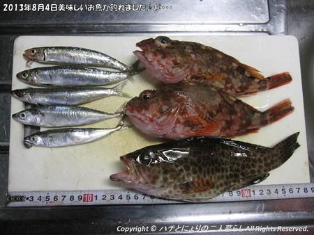 2013年8月4日美味しいお魚が釣れました♪が・・・ (3)