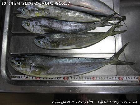 2013年8月12日意外と美味しいお魚でした♪ (3)