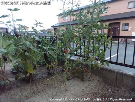 2013年8月14日ハチとにょり農園 (3)