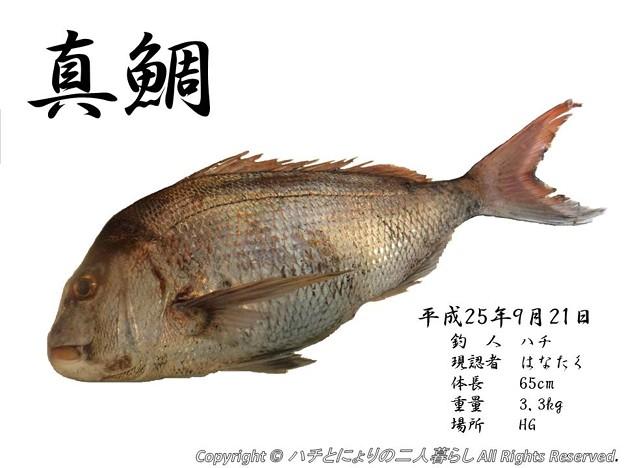 写真: 真鯛デジタル魚拓