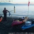 Photos: 2013年12月1日イワシ大漁!! (11)