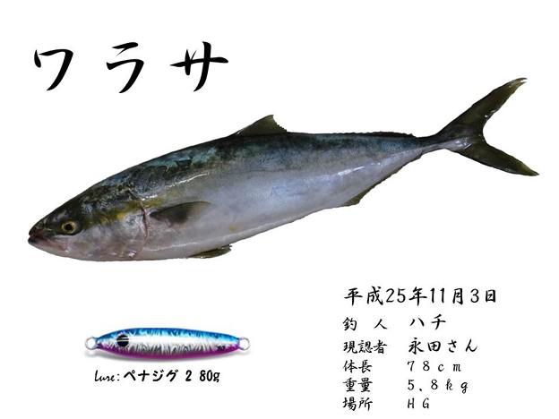Photos: 喧嘩ブリ魚拓