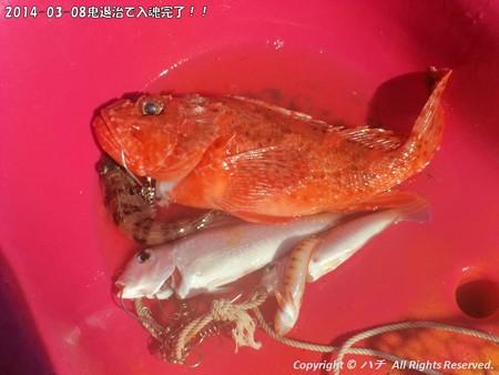 2014-03-08鬼退治で入魂完了!! (17)