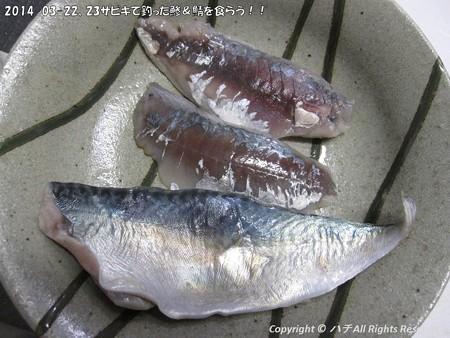 2014-03-22、23サビキで釣った鯵&鯖を食らう!! (1)