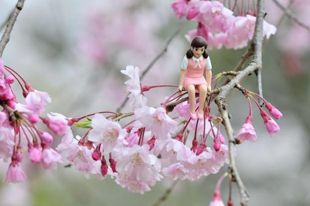 0406-花見のフチ子さん-01
