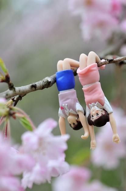0406-花見のフチ子さん-05