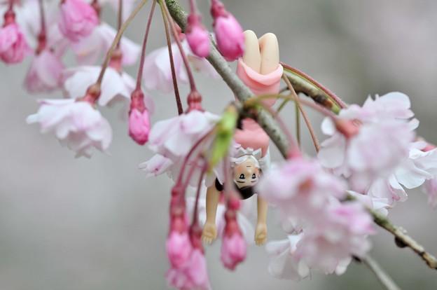 0406-花見のフチ子さん-06