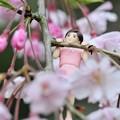 Photos: 0406-花見のフチ子さん-07