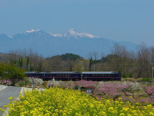 Photos: 桃の花と菜の花と485系華 @新府