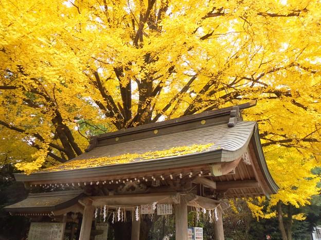 屋根の上の黄葉
