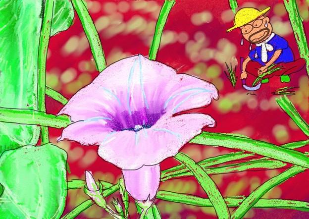 写真: サツマイモの花