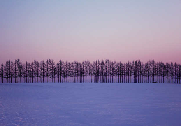 夕暮れ木立