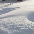 Photos: 雪と防風林