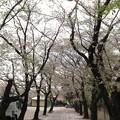 Photos: 13.04.05.勝願寺(鴻巣市)2