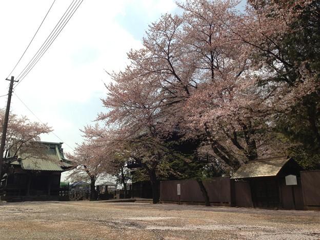 Photos: 13.04.05.勝願寺(鴻巣市)3
