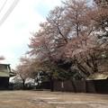 13.04.05.勝願寺(鴻巣市)3