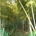 通船堀公園(さいたま市緑区)