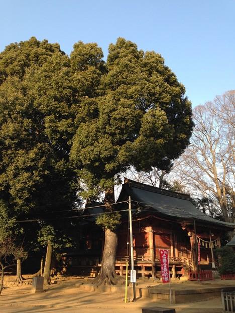 Photos: 河越城 三芳野神社