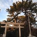 寒川神社 三の鳥居(神奈川県高座郡寒川町)