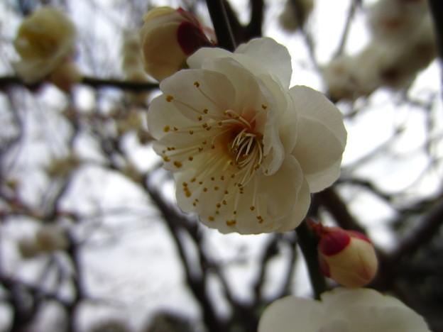 14.02.13.亀戸天神社(江東区)