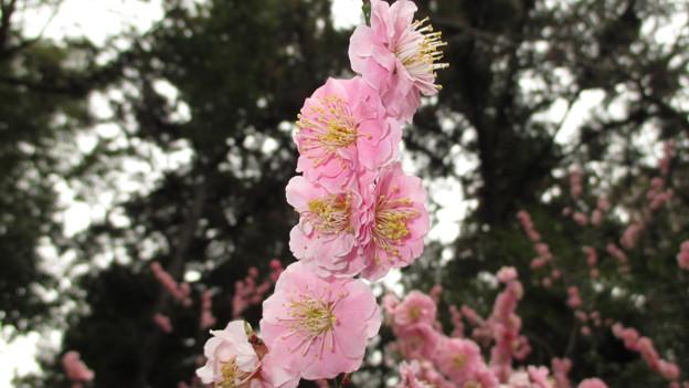 14.03.27.浅間神社(山梨県笛吹市)