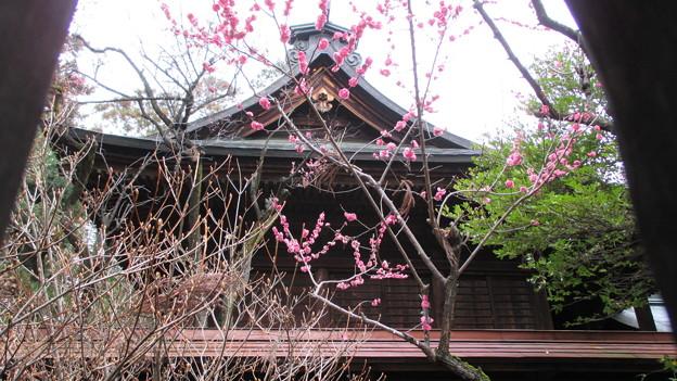 14.03.27.浅間神社・夫婦梅(山梨県笛吹市)
