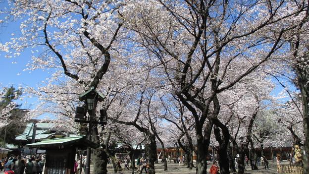 14.03.31.靖国神社