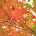 牧歌の里の紅葉 その2