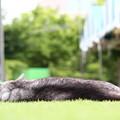 Photos: 夏バテ・・・野良猫。