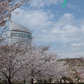 Photos: 玉藻(たまも)公園、春爛漫♪