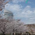 玉藻(たまも)公園、春爛漫♪