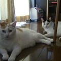 写真: ダイちゃん、モウちゃん