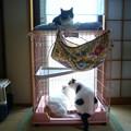 写真: ダイちゃん、モウちゃん、ナキちゃん