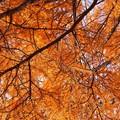 写真: ~オレンジな秋~