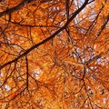 ~オレンジな秋~
