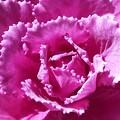 Photos: ~あるいは薔薇のように~