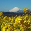 ~春模様の富士山~