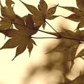 ~セピアな秋の~