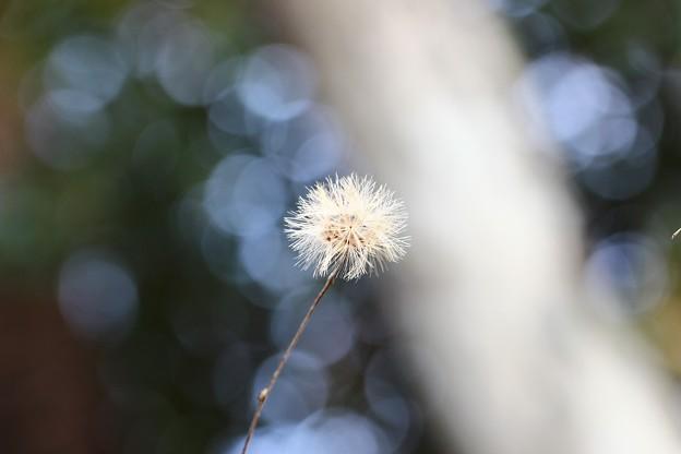 Photos: ~Milky wayにいだかれて~