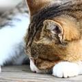 Photos: ~今日はニャンの日?猫の日!~