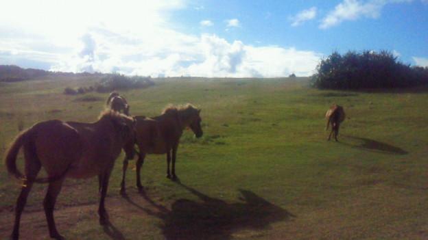 写真: 与那国馬ちゃん♪ #与那国島