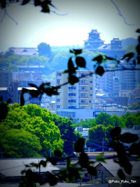 立田山から眺めた熊本城。
