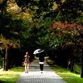 休日の散歩道