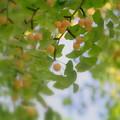 秋の実み~つけた!